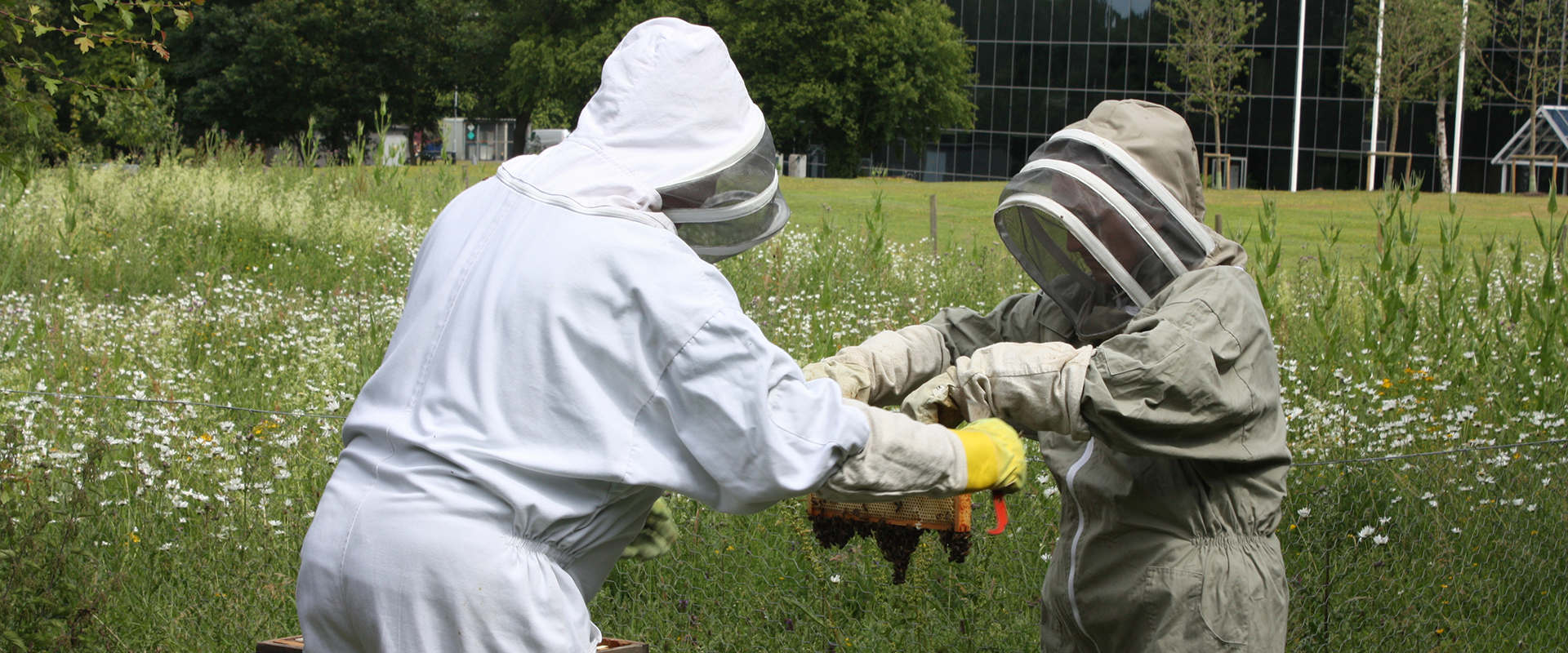 Beekeepers in Hatfield meadow