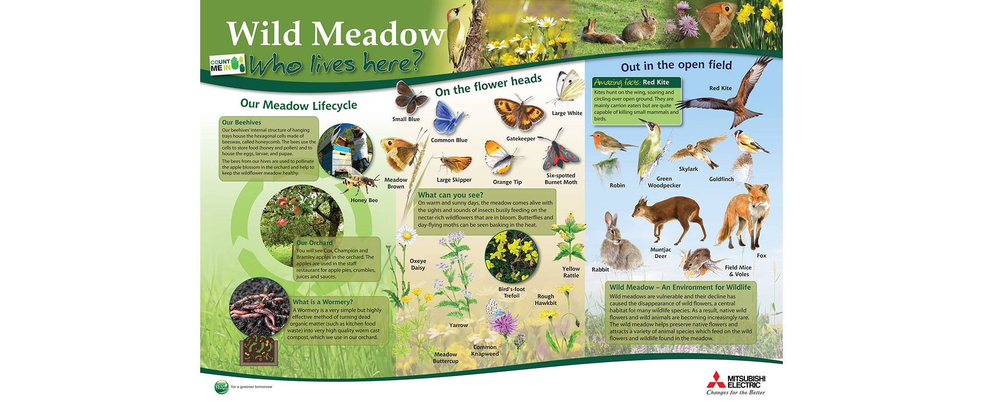 Animals and flowers in the Hatfield meadow