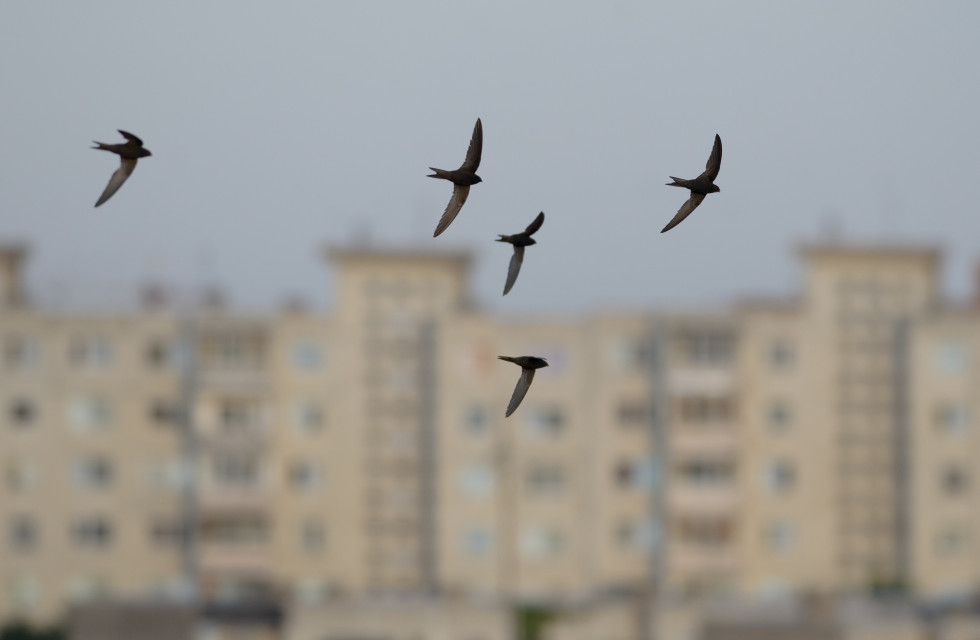 GettyImages 177086897 SWIFTS