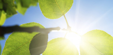 135 Joe Bradbury Thinkstock Leaves Sun